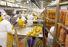 Технология производства вареной колбасы