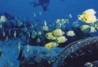 искусственные рифы из шин для морских обитателей