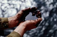 Почвенный покров и нефть