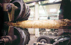 Стадии глубокой переработки древесины