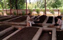 Производственная технология изготовления экологичного удобрения (биогумуса)