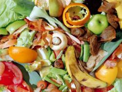 Проблемы переработки органических отходов