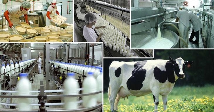 Исследования по переработке молока